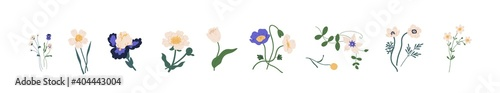 Fotografía Botanical set of garden floral plants