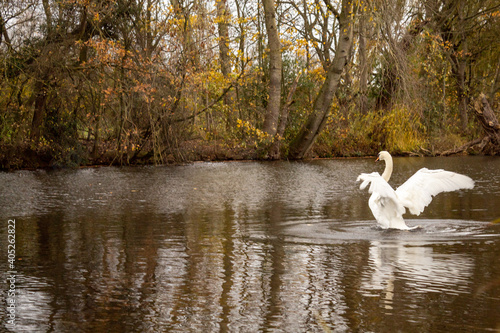 Obraz na płótnie Autumn in Park Markeaton in England