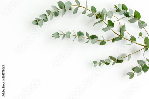 Valokuvatapetti Green leaves eucalyptus isolated on white background