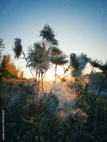 Close-up Of Dandelion On Field Against Clear Sky Fototapete