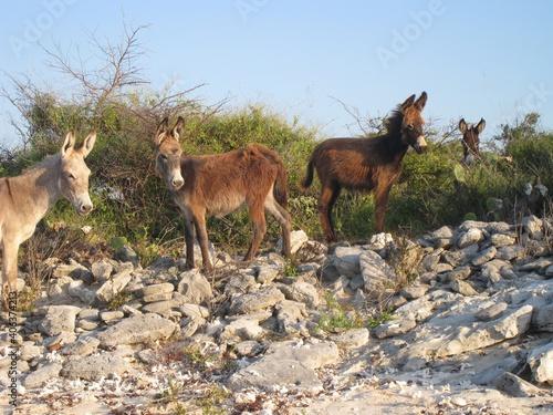 Valokuvatapetti Donkeys Standing On Rocks Against Clear Sky