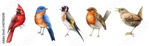Valokuva Bird set watercolor illustration