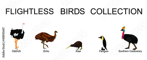 Slika na platnu Flightless birds collection vector illustration isolated on white background