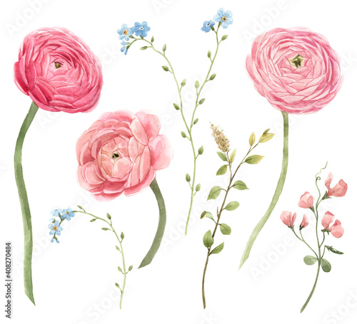 Photo Beautiful floral set with watercolor gentle red spring ranunculus flowers