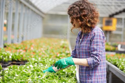 Tela Florist Working In Garden