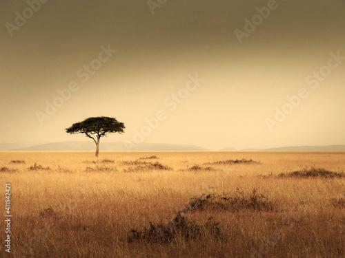 Fototapeta Lonley Tree On Field Against Clear Sky