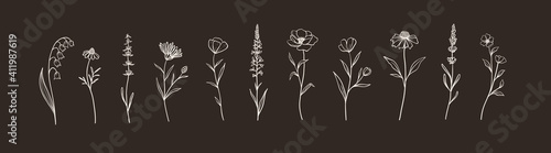 Canvas Print Set of Herbs and Wild Flowers