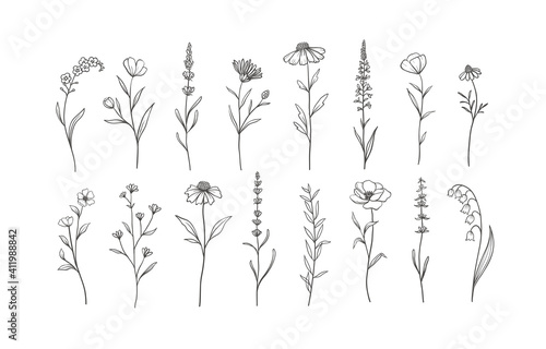 Photo Set of Herbs and Wild Flowers
