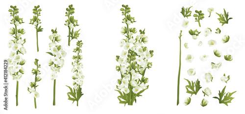 Photo Delphinium larkspur isolated on white compilation 3d vector illustration set