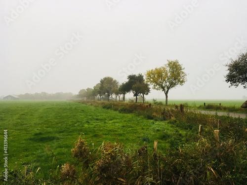 Fotografiet Trees On Field Against Clear Sky