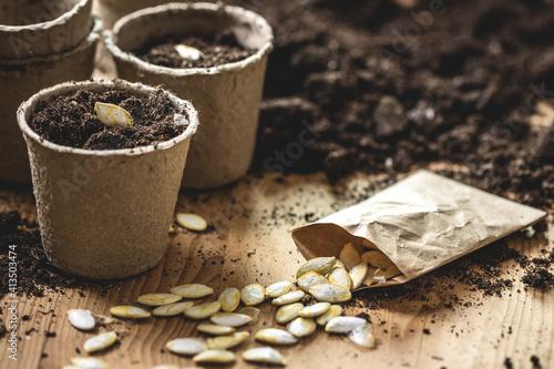 Canvas Print Planting seeds at peat pot