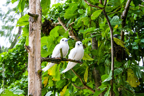 Fototapeta seychelles aride beach tropical birds