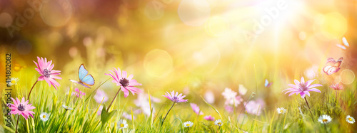 Abstract Defocused Spring - Purple Daisies And Butterfly On Grass In Sunny Field