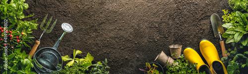 Valokuva Gardening tools and seedlings on soil