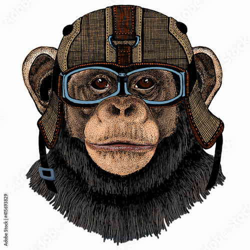 Valokuva Vector chimpanzee portrait. Ape head, monkey face.