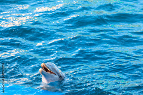 Happy dolphin in the dolphinarium . Trained fish in the blue water