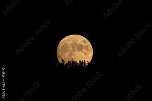 Fotografie, Obraz large orange full moon rising behind silhouette of trees in the black night sky