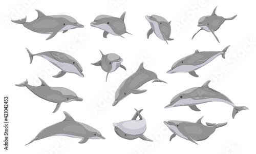 Photographie Common bottlenose dolphin set