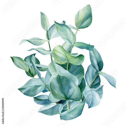 Fotografie, Obraz Eucalyptus bouquet, leaves on isolated on white background, green design
