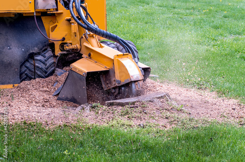 Close Up Of A Stump Grinder Machine, Grinding Up A Tree Stump Into Saw Dust And Fototapet