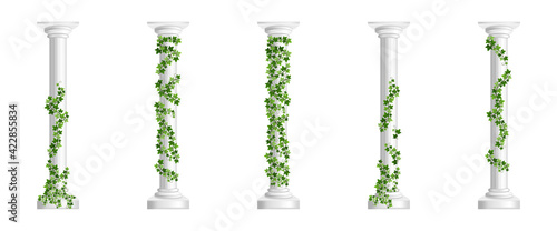 Obraz na plátně Marble greek columns with green ivy creeper isolated on white background