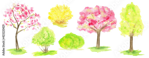Fotografija Watercolor Spring sakura tree, green and yellow forsythia bush set, Pink flower sour cherry tree hand drawing illustration