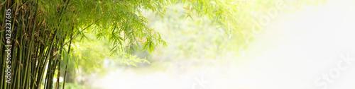 Obraz na płótnie Nature of green leaf bamboo in garden at summer