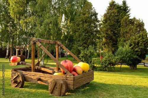 Wallpaper Mural Apple catapult in the park.