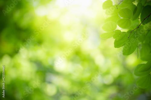Nature of green leaf in garden at summer Fotobehang
