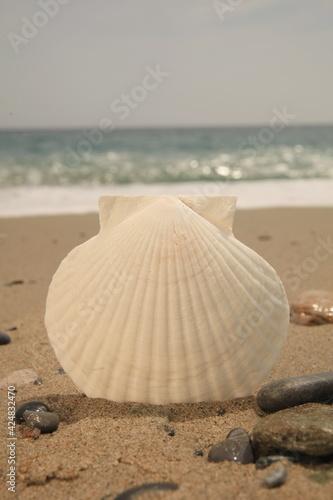 Stampa su Tela Shell on a sandy beach