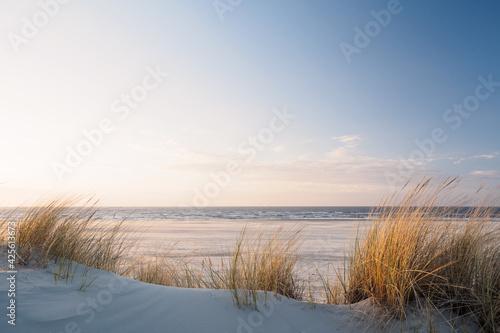Golden dune grass at the beach Fototapeta