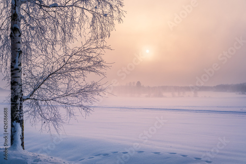 Fotografie, Obraz Scenic winter landscape with lonely scow covered tree and sunrise at morning time in Finland