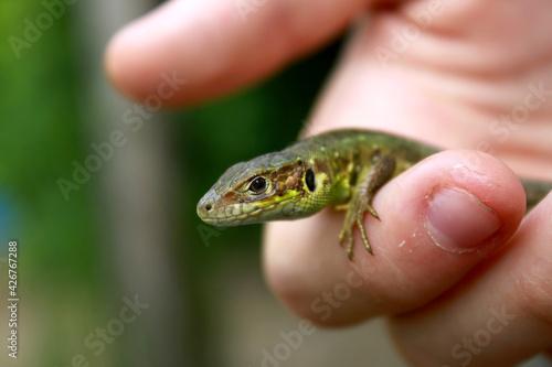 Carta da parati lizard on hand
