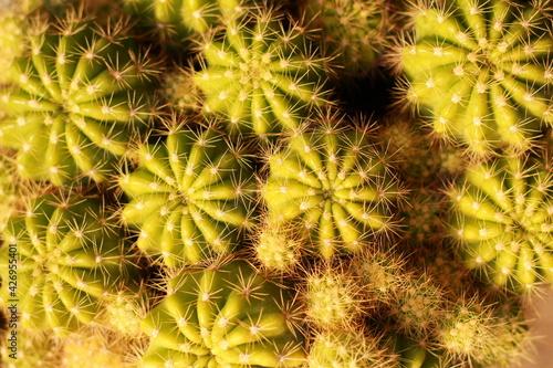 cactus background Tapéta, Fotótapéta