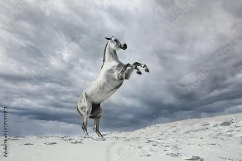 Obraz na plátně white horse jumping in the desert