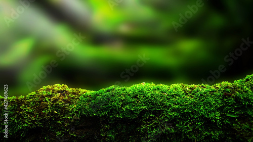 Photo closeup or macro beautiful moss in forest background