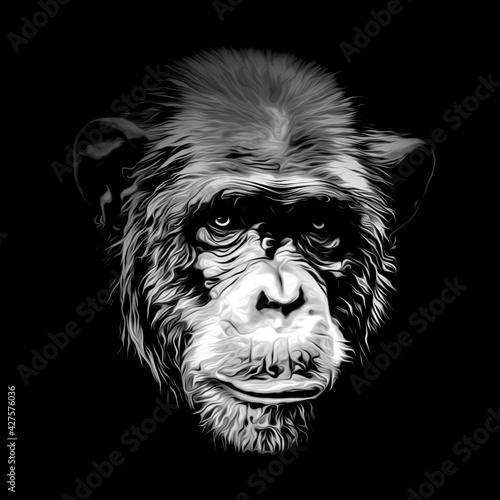Cuadros en Lienzo portrait of a Chimpanzee head on black