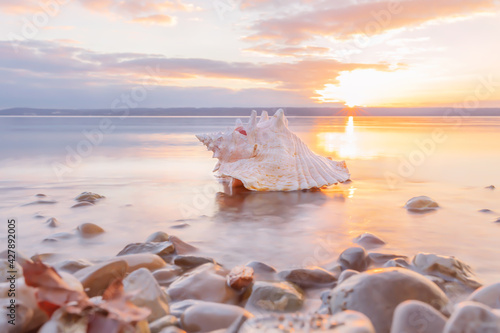 Fotografering conch sea shell laying at the beach at sunset