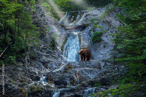 Fotografia Dolina Bialego Potoku. Zakopane