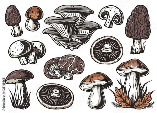 Stampa su Tela Mushroom picking of morel