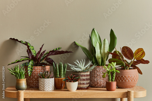 Canvas Print Stylish composition of home garden interior filled a lot of beautiful plants, cacti, succulents, air plant in different design pots