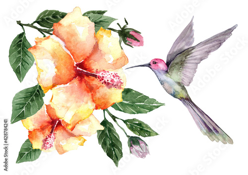 Fototapeta Composition of flying bird hummingbird with tropical flowers and hibiscus buds on branches with green leaves