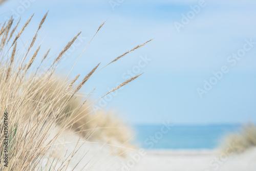 Baltic sea dunes over blue coastline background Fototapeta