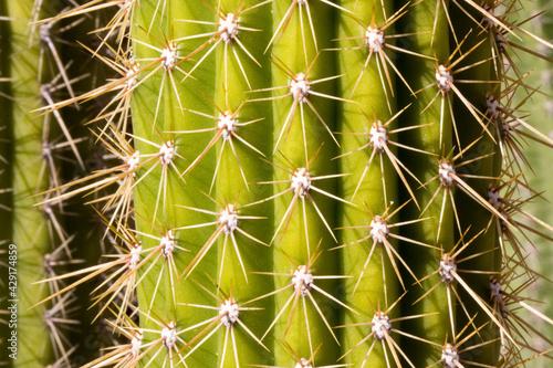 Close up of cactus Tapéta, Fotótapéta