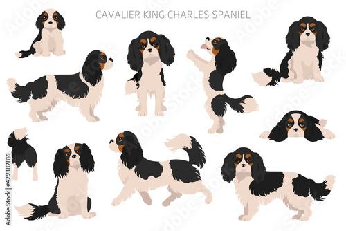 Valokuva Cavalier King Charles spaniel clipart