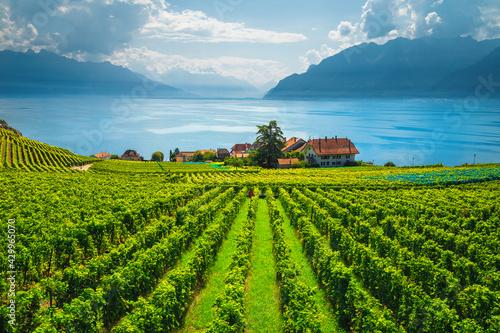 Canvas Print Majestic vineyards on the shore of the lake Geneva, Switzerland