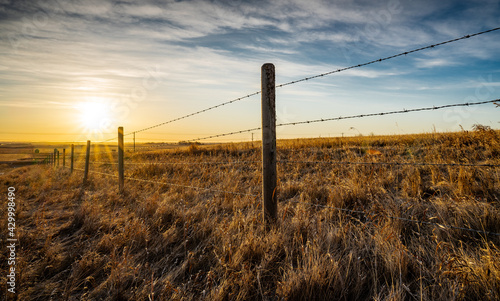 Canvastavla Sunrise behind a wooden barbed wire fence over natural prairie grasslands in Alberta Canada