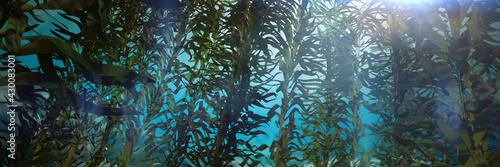 Fotografie, Obraz kelp forest, giant brown algae seaweed