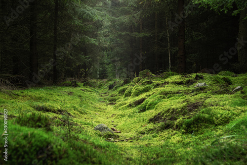 Canvas Print Beautiful and peaceful forest with green moss covering the forest floor
