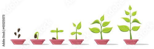 Fényképezés Phases plant growing in pot